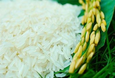 Nông sản vào Nhật: khó trước, lợi sau